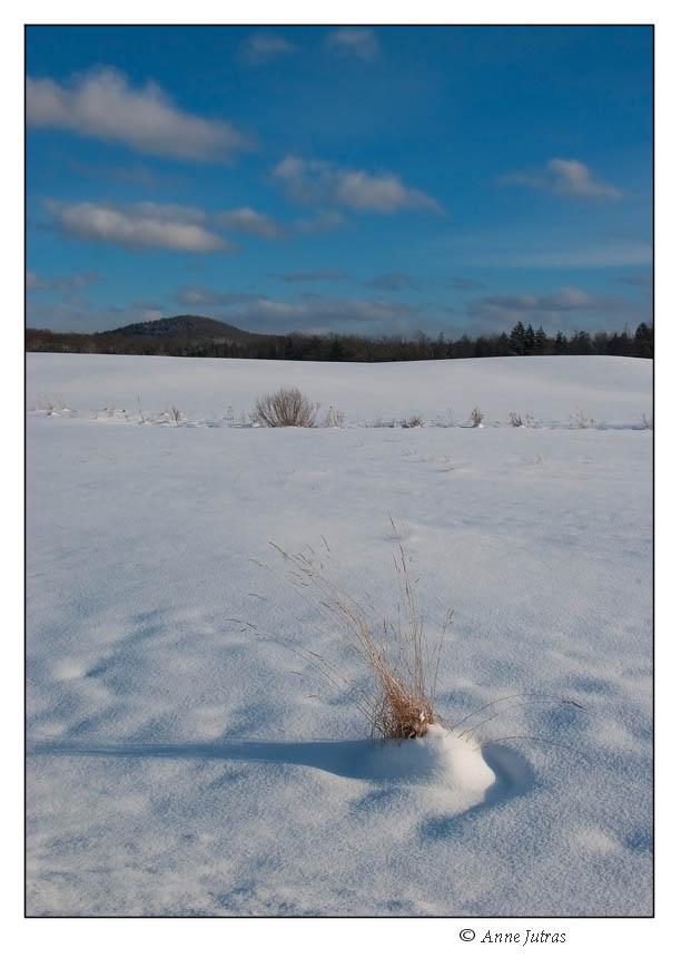 Jour 215 ~ Blanc comme neige