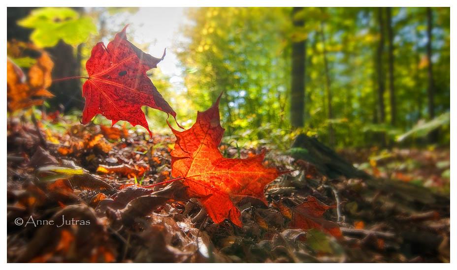 L'automne est dans ses feuilles (1/3)
