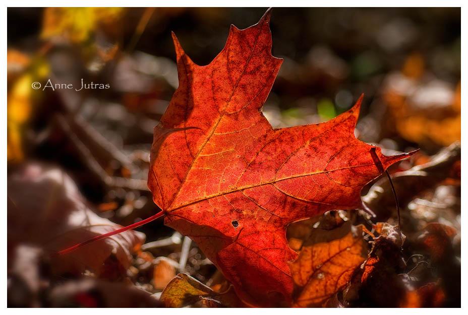 L'automne est dans ses feuilles (2/3)