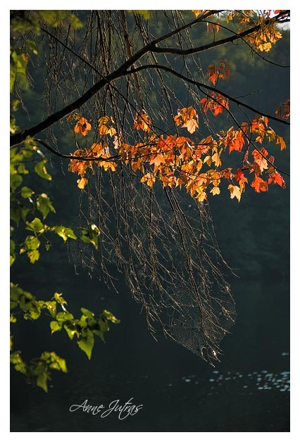 automne, feuille rouge, photographie, québec, canada, anne jutras