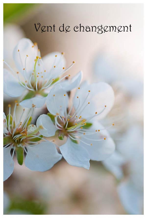 fleur, pommier, printemps, anne jutras, bromont, la randonnée photo