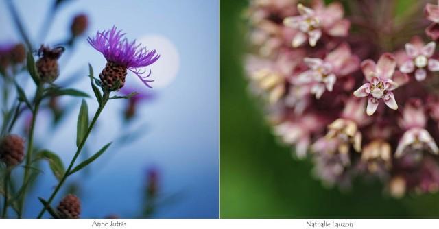 nature, photo, fleur,